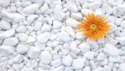 Zierkies Thassos 4 - 8 cm - Schneeweiß Marmor